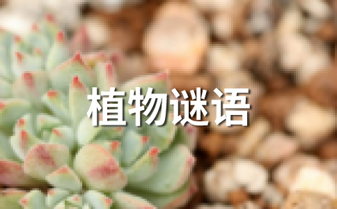 身杆长又长,花开黄又黄,脸盘朝太阳,籽儿香又香。 (打一植物)