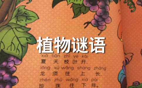 小小花儿价最高,八月中秋香气飘,吴刚用它酿好酒,人间用它做糖糕。 (打一花卉)